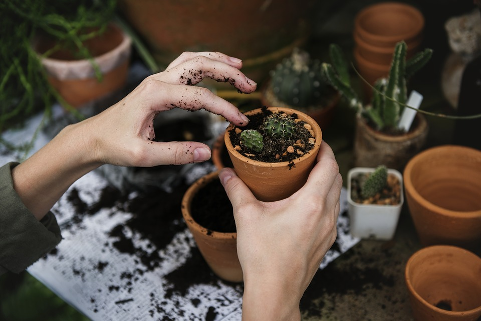 Garden For A Warmer Climate
