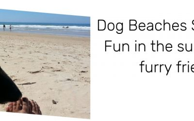 Dog Beaches Spain 2019: Fun in the sun with our furry friends!