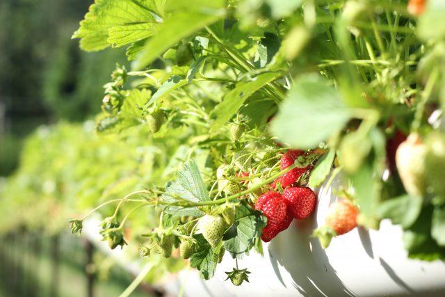 your garden in spain